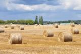 LED rural landscape