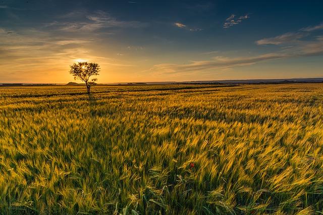 sunset-1390008_640