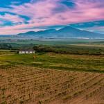 vineyard-1474395_640