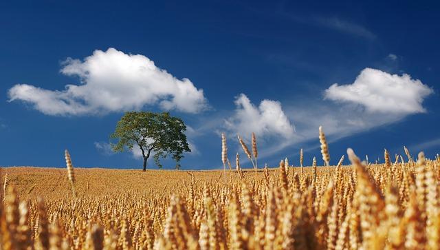 Campo coltivato - Immagine ex Pixabay